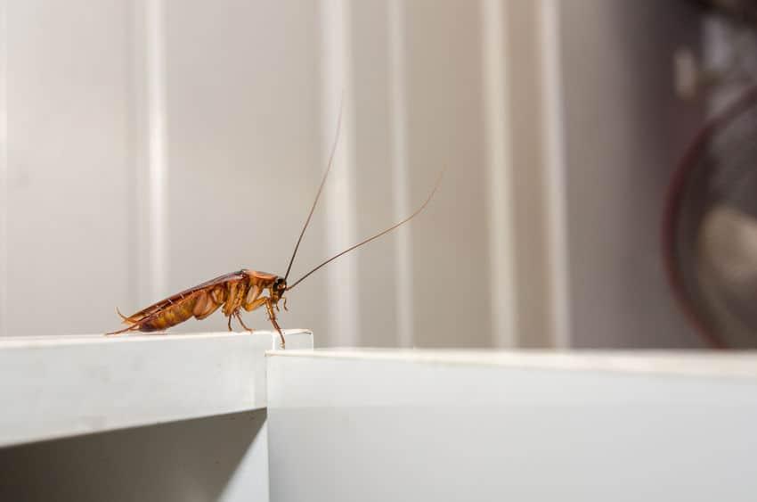 Response Pest Control | Brisbane | Termite Inspections | Termite Barriers | Pest Control | End of Lease | Natural Pest Control | Fleas | Cockroaches