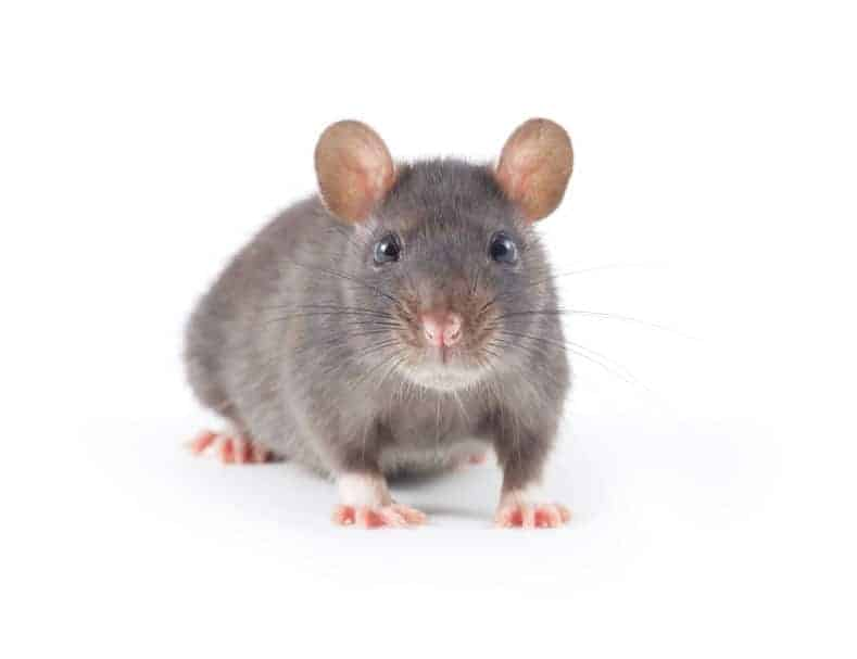 Response Pest Control | Brisbane | Termite Inspections | Termite Barriers | Pest Control | End of Lease | Natural Pest Control | Fleas | Cockroaches | Silver Fish | rodent