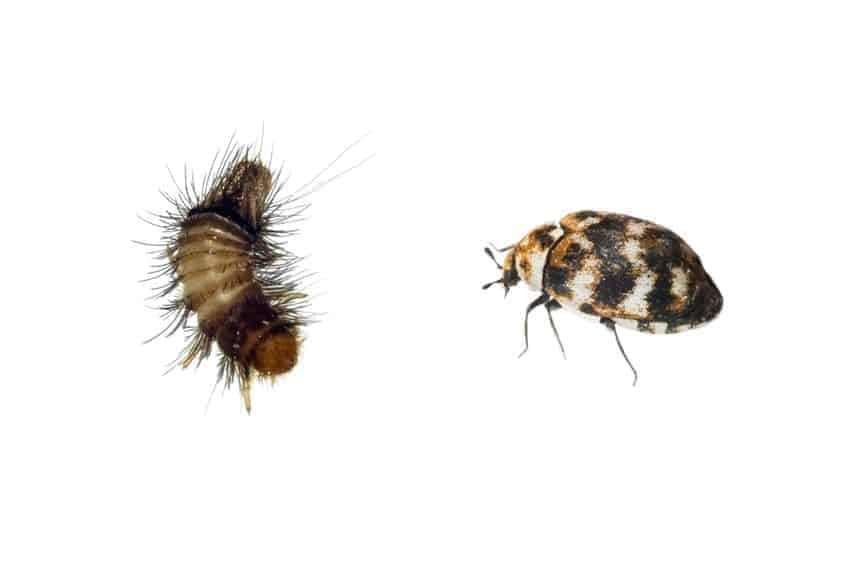 Response Pest Control | Brisbane | Termite Inspections | Termite Barriers | Pest Control | End of Lease | Natural Pest Control