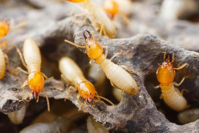 Response Pest Control | Brisbane | Termite Inspections | Termite Barriers | Pest Control | End of Lease | Natural Pest Control | Fleas | Cockroaches | Silver Fish | termite