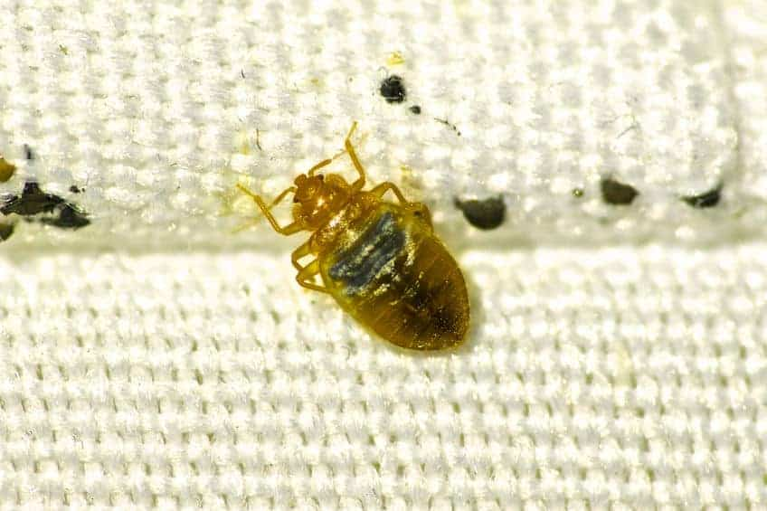 Response Pest Control | Brisbane | Termite Inspections | Termite Barriers | Pest Control | End of Lease | Natural Pest Control | Fleas | Cockroaches | Silver Fish | Bed Bugs