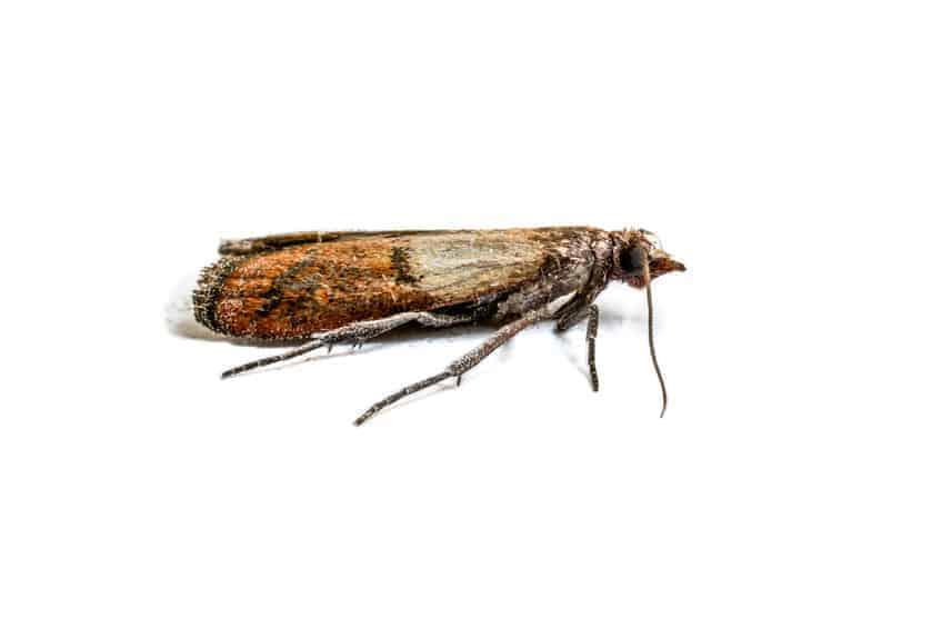 Response Pest Control | Brisbane | Termite Inspections | Termite Barriers | Pest Control | End of Lease | Natural Pest Control | Fleas | Cockroaches | Silver Fish | Moths